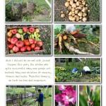 Garden2013 004 (Sheet 4)